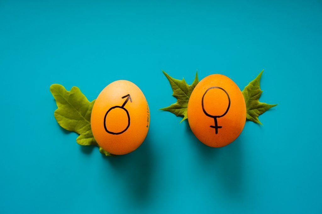 Dia da Igualdade Feminina
